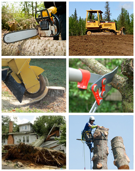 Tree Removal Services Ultimate Tree Service LLC